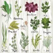 Herbs set — Stock Vector