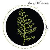Cypress sprig — Stock Vector