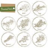 Provencal Herbs — Stock Vector