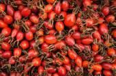 Ripe berries of wild rose, Russia — Stock Photo