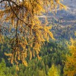 Golden autumn in the Swiss Alps — Stock Photo #58136987