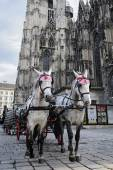 Horses waiting to whisk tourists around the beautiful city of Vienna, Austria — Foto Stock