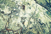 The surface of natural stone from the coast of the Adriatic Sea, Croatia — Stock Photo