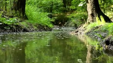 Brook in the forest (trees, bushs, grass) - small flys fly above the brook - sun — Stock Video