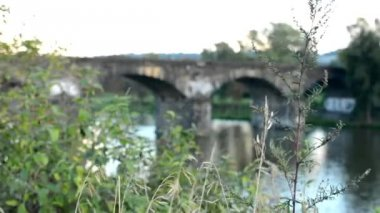 Natur (buskar och träd) - bro för tåg över floden i bakgrunden — Stockvideo