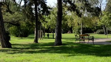 People relax in the park (sitting)- nature (grass and trees) - benches - pavement - sunny — Stock Video