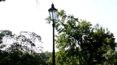 Park - green nature (trees and grass) - street lamps - pavement - sunny - nobody — Vídeo de stock