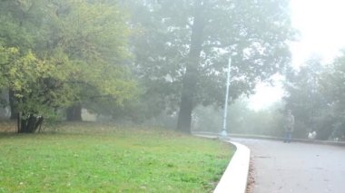 Panorama of park (trees) - path with woman walk dogs - morning mist — Stok video