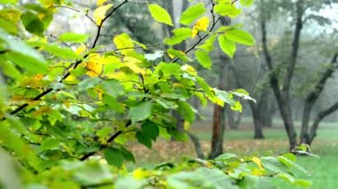 Autumn park (forest - trees) - fallen leaves - tree branch with spider web - mist — Vidéo