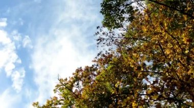 Autumn forest (park - trees) - treetop - blue sky — Stock Video
