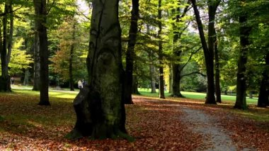 Panorama autumn park (trees) - fallen leaves - people walking in background - sunny — Stock Video