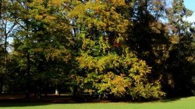 Panorama autumn park (forest-trees) - sun rays (sunny) - grass (lawn) — Stockvideo