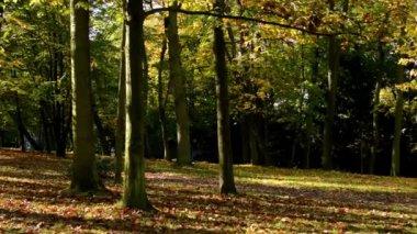 Panorama autumn park (forest-trees) - fallen leaves - sun rays (sunny) — Stock Video