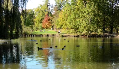 Autumn park (trees) - people relax - lake with ducks - person sit on bench — Stock Video