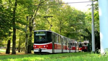 Trams wait in depot (station) - park (forest - trees) - people walking - sunny — Stock Video