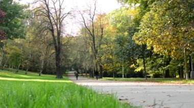 Autumn park (forest - trees) - fallen leaves - grass - people in background — Stock Video