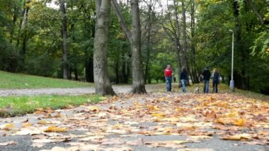 Autumn park (forest - trees) - fallen leaves - grass - people in background (friends) — Stock Video