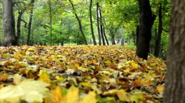 Autumn park (forest - trees) - fallen leaves - grass - people in background (woman runner) — Stock Video