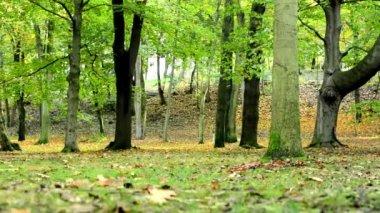 Autumn park (forest - trees) - fallen leaves - grass — ストックビデオ