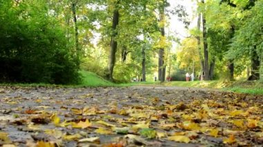 Fallen leaves on road - Autumn park (forest - trees) - people in background — Stock Video
