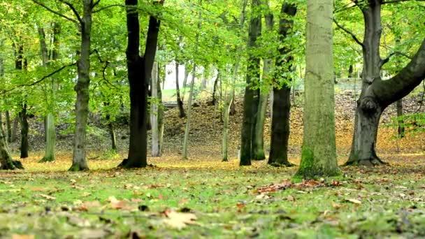 Autumn park (forest - trees) - fallen leaves - grass — Vidéo