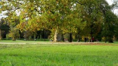 Autumn park (trees) - people walking - fallen leaves - grass — Stock Video