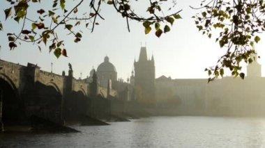Charles bridge with tree (branch) - sunrise - Prague, Czech Republic - river Vltava — Stok video