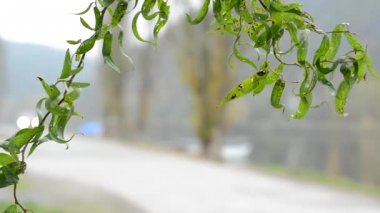 Detail of tree branch - unfocused river with trees and road — Stock Video
