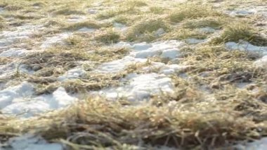 Winter grass with snow - morning dew - sunbeams — Stock Video