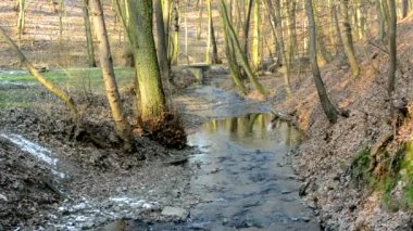 Brook in the forest - sunny - winter - bere trees and grass — Stock Video