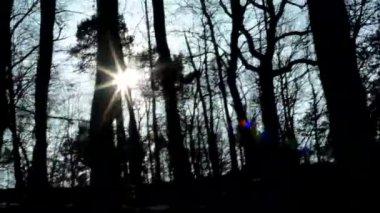 Nackte Wald und Sonnenstrahlen - sonnig — Stockvideo