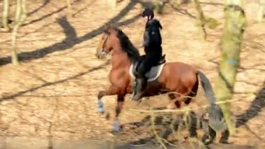 Horseriders ride in the forest — Stock video