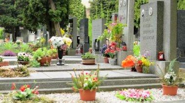 PRAGUE, CZECH REPUBLIC - MAY 2, 2015: Cemetery - gravestones (flowers) — Стоковое видео