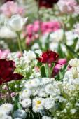 Canteiro de flores com flores coloridas — Fotografia Stock