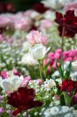 Flowerbed with colorful flowers — Stock Photo