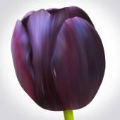 Svart tulip flower — Stockfoto