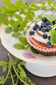 Hausgemachte Cupcakes mit Sahnehäubchen und Heidelbeeren — Stockfoto