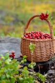 Fresh cranberries in a basket — Stock Photo