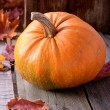 Pumpkin on an old tree still life autumn — Stock Photo #55843643