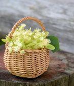 Medical linden flowers harvest wicker basket on summer grass — Stock Photo