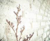 Bundle of dry lavender at white brick wall — Stock Photo