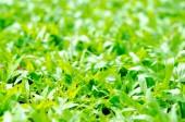 Green grass texture. — Stock Photo