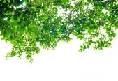 Look up view, Green tree — Stock Photo