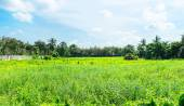 Landscape view of deserted land — Stock Photo