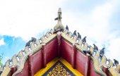 Pigeons on Thai temple roof — Stok fotoğraf