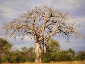 The Mikumi National Park under the sunshine in Tanzania. — Stock Photo