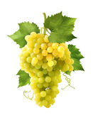 Yellow grapes bunch isolated on white background — Stock Photo