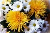 Yellow chrysanthemums and white gerberas — Stok fotoğraf