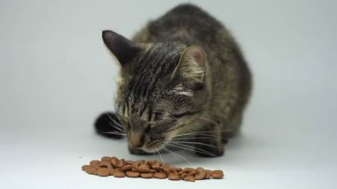 Cat eating pet food. White background. — Stock Video