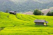Baan Pa Bong Piang rice terraced field — Foto de Stock